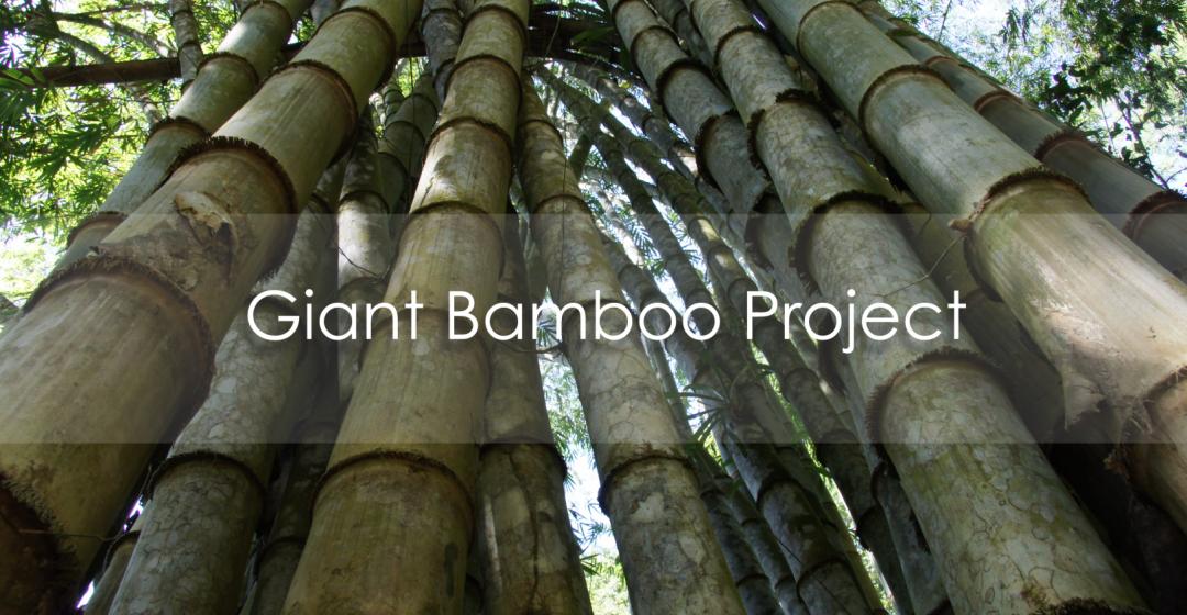 piantagione bambu gigante crowdfunding